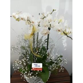 VİP Kraliçe 3 Dallı Beyaz Orkide