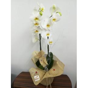 VİP Çift Dallı Beyaz Orkide